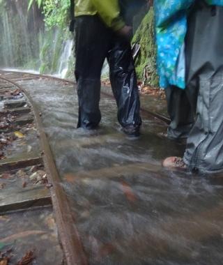 c89cdb726f4 Yakushima Life: Guided Hiking to Jomon Sugi